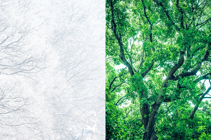 SNOW WHITE & DEEP FOREST GREEN